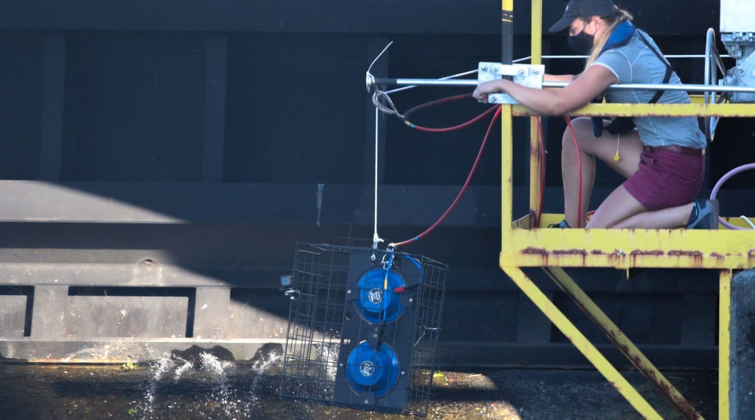 U.S. Army Corps uses GenusWave technology to to deter seals from Ballard Locks