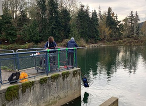 GenusWave technology is helping to save salmon in Washington State